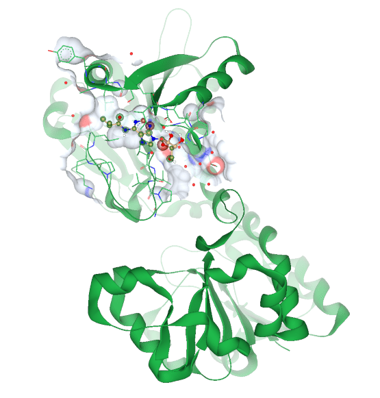 protein-ligand complex in SeeSAR